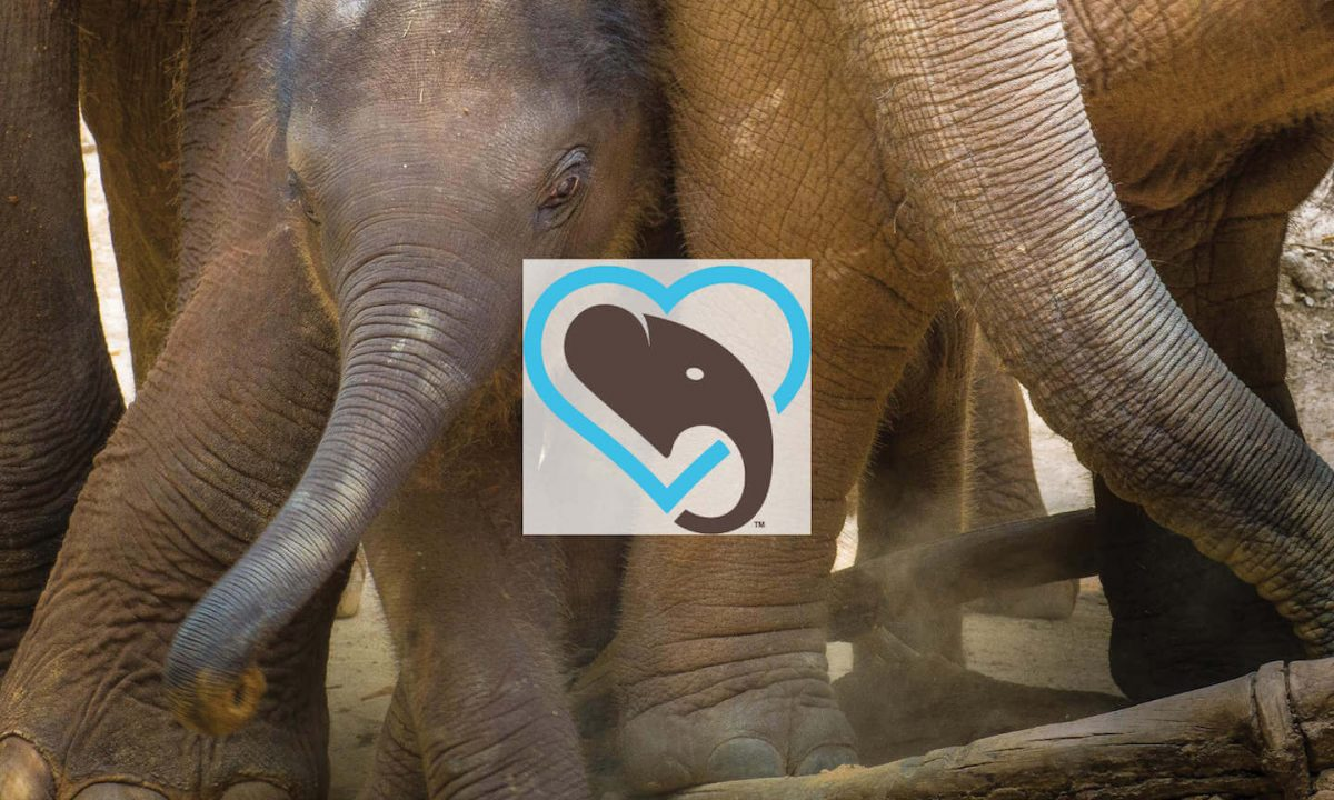 How #WorldElephantDay Uses Keyhole to Help Find Investors